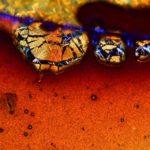 Nézd meg a káros szenvedélyed mikroszkóp alatt
