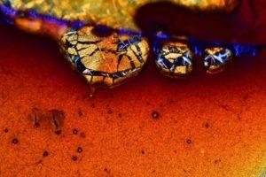 kávé mikroszkóp alatt